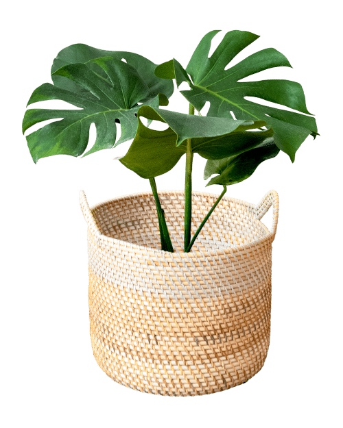 monstera digital bohemienne